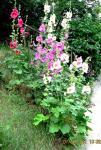 Цветы моего детства