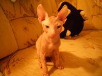Мой кот Баюн.
