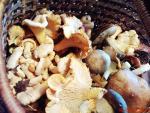 грибы в пущино